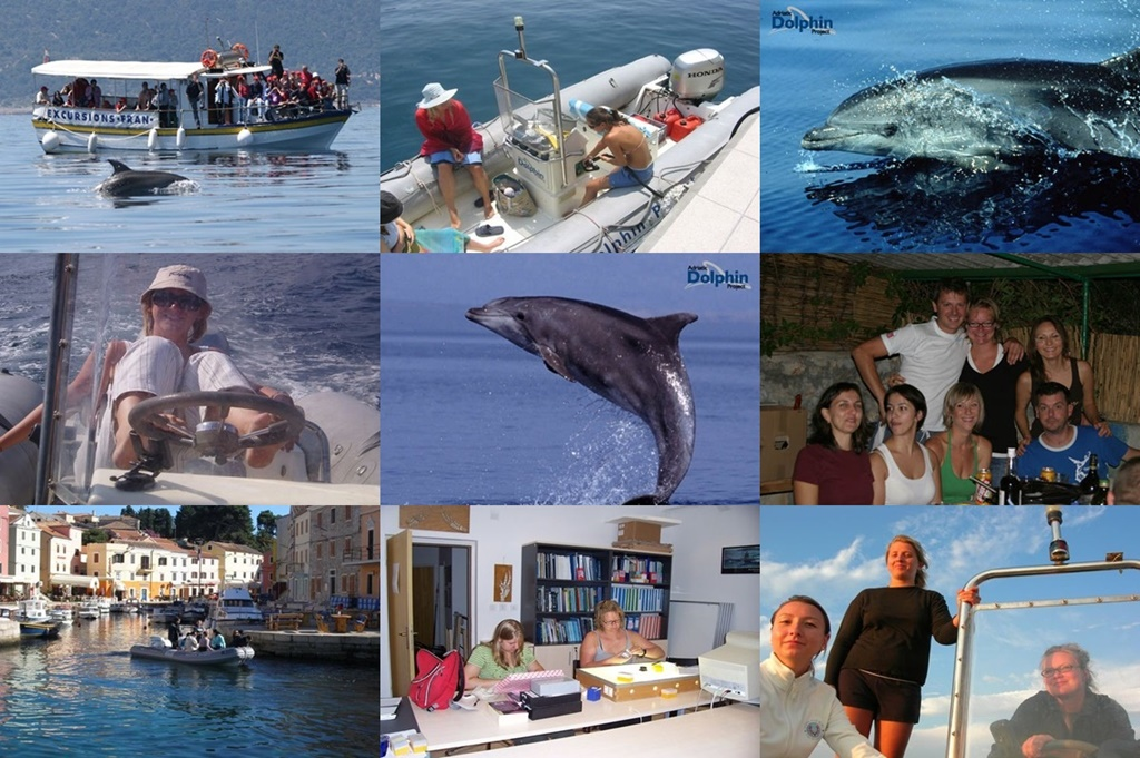 Work for protecting the dolphins in Croatia