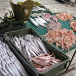 fish market split