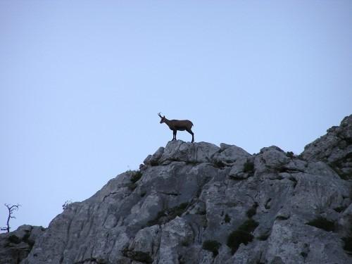 National park Sjeverni Velebit Croatia (3)