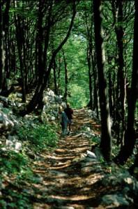 National park Risnjak Croatia (6)