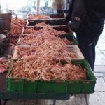 Fish market in Split (3)