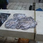 Fish market in Split (4)