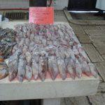 Fish market in Split (5)