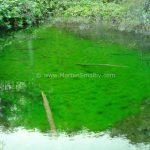 Plitvice algae