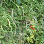 Plitvice wild berries