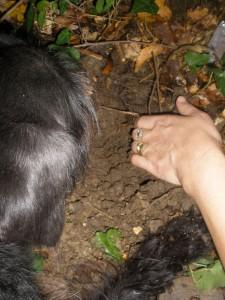 Istria truffle Hunting (3)