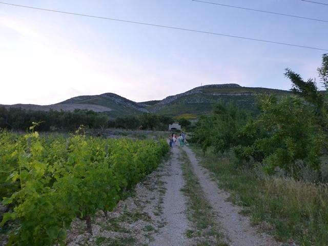 Kuzmanic vineyard